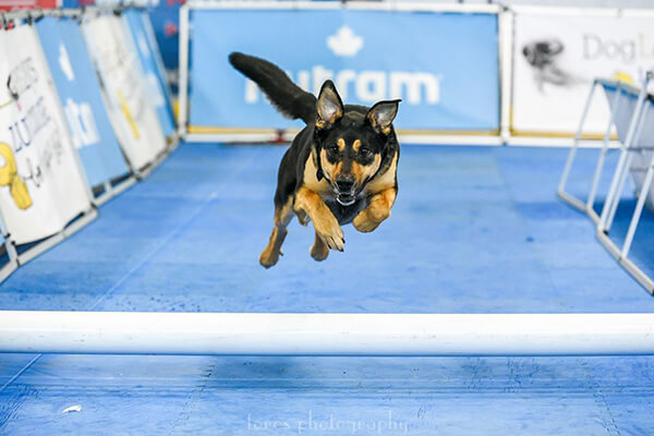 black and brown dog jumping over pipe on lure cours